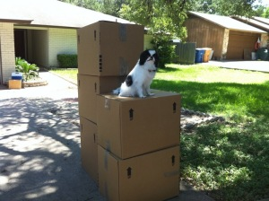 Somebody put Pico on some boxes in the driveway